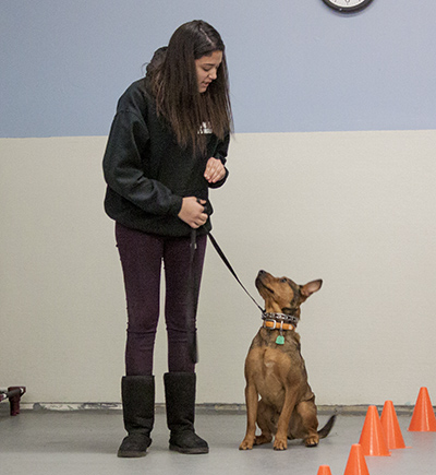 trainer certification program - hanlon's k9 | nj dog trainer | toms ...