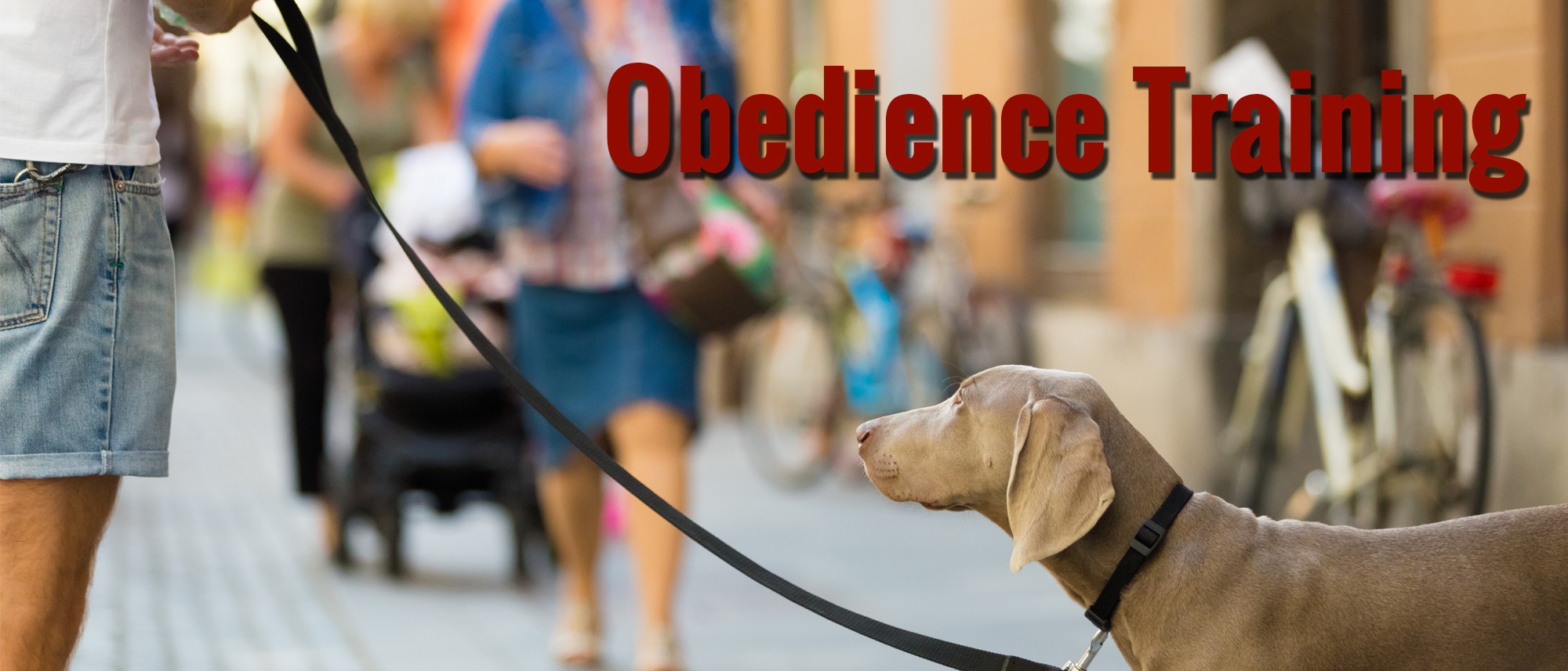 Dog Obedience Training Toms River Nj